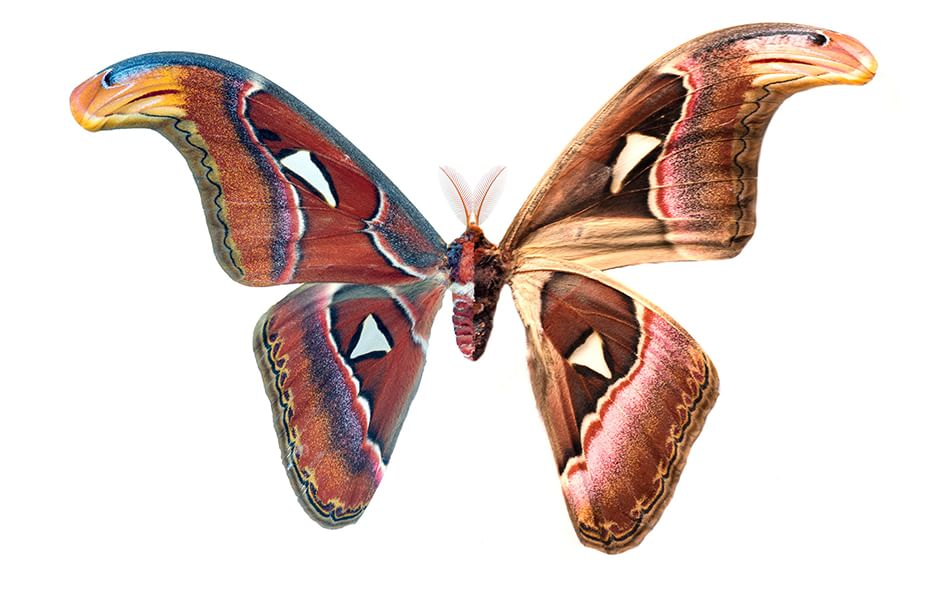 Foto: Le ingannevoli ali delle farfalle