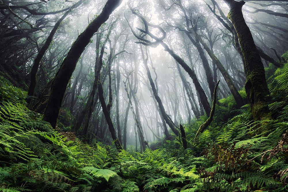 La bellezza selvaggia delle Canarie nelle fotografie di Lukas Furlan