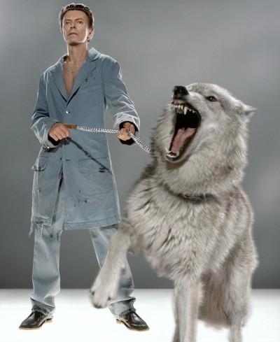 David Bowie insieme ai lupi