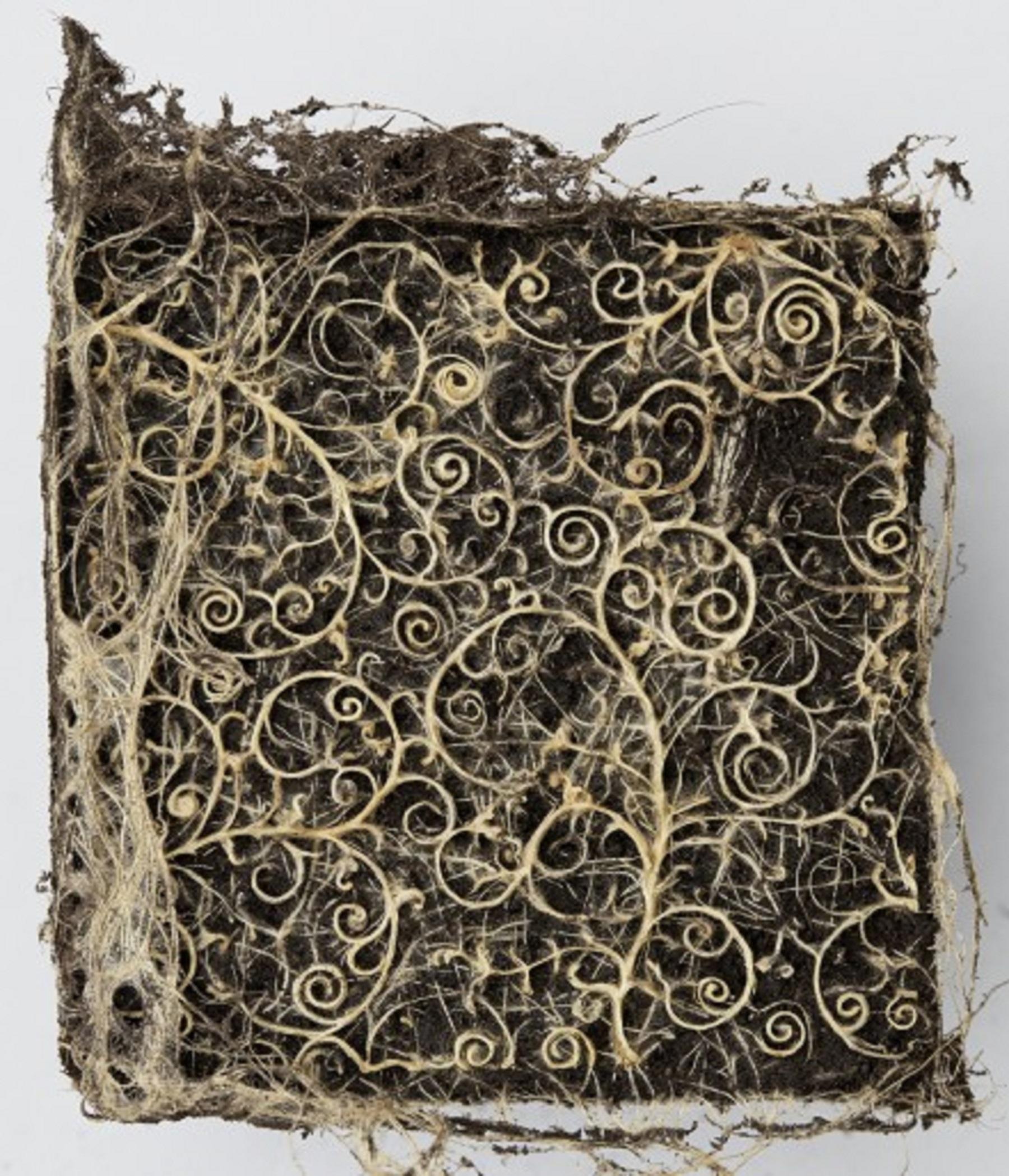 Artista guida la crescita delle radici, per creare opere d'arte