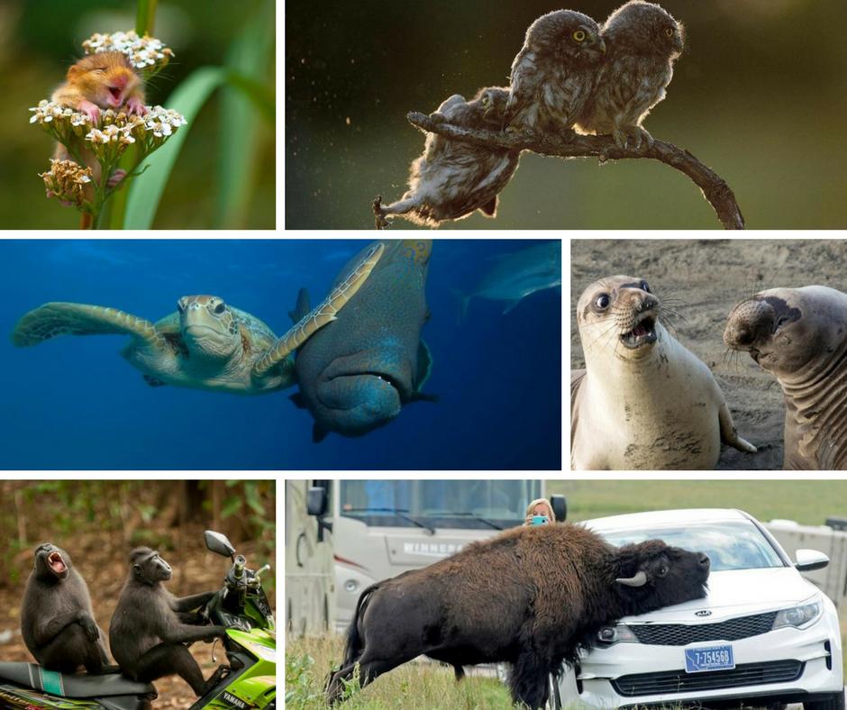 Il concorso fotografico più divertente del mondo: Comedy Wildlife