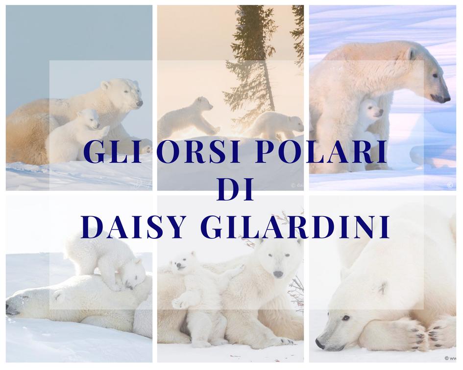 Entra nel mondo degli orsi polari grazie agli scatti di una grande fotografa