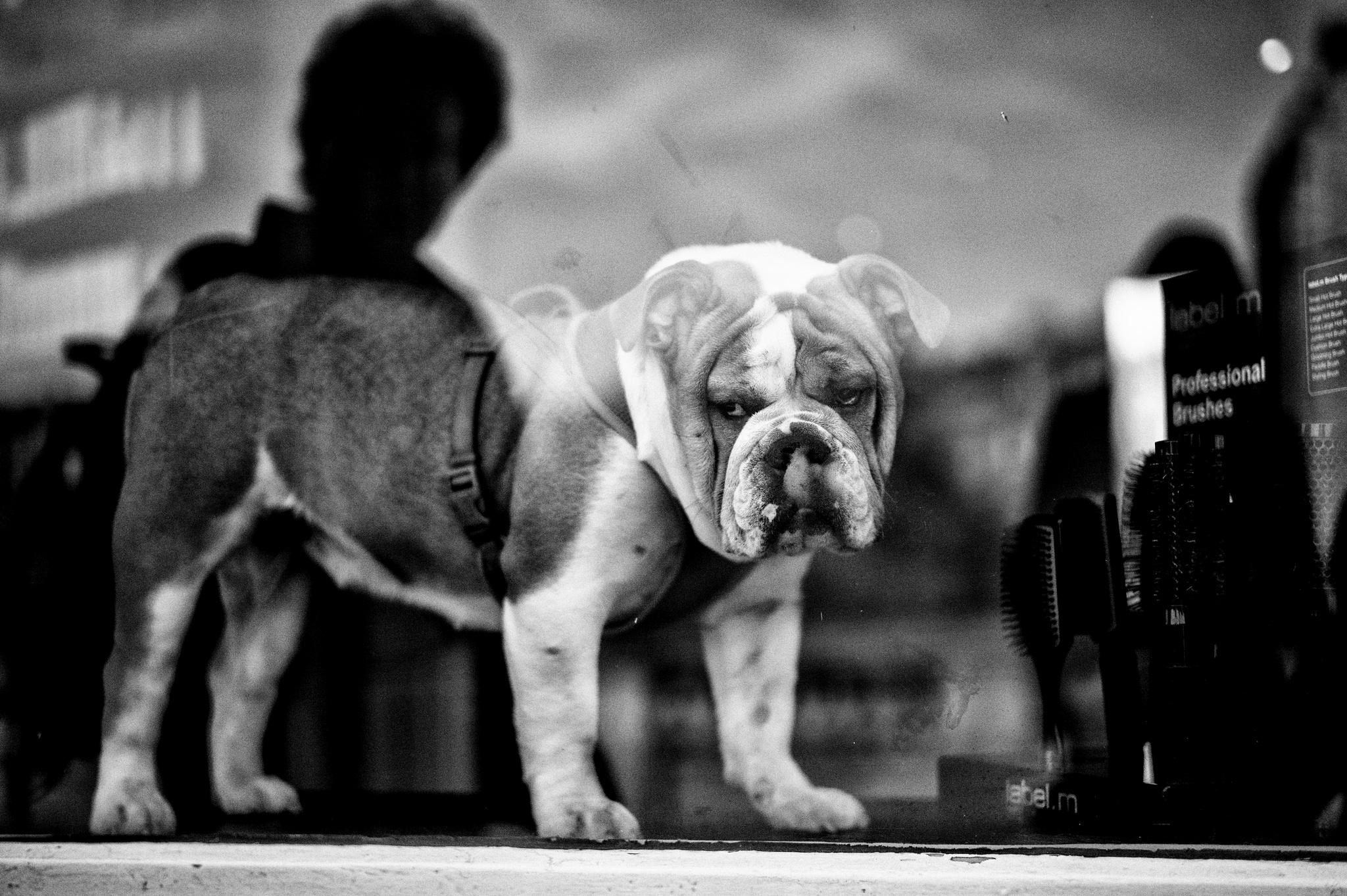 Una Street Photography a… quattro zampe!
