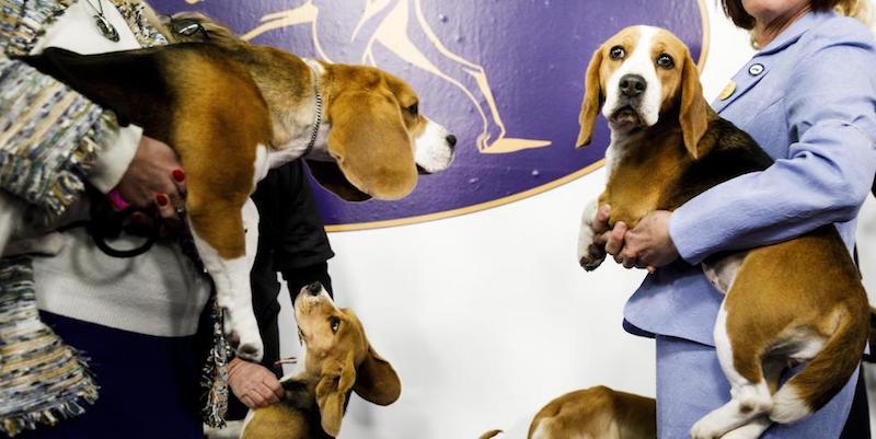 Vita da cani da concorso
