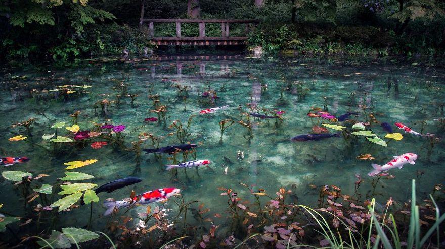 Giappone: lo stagno sembra un quadro di Monet