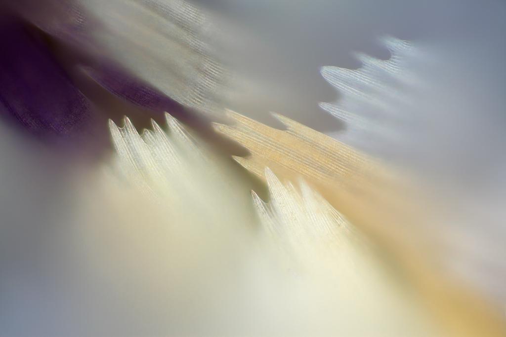 I minuscoli dettagli delle ali delle farfalle in incredibili fotografie macro