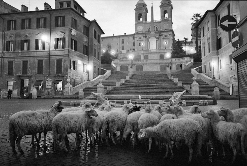 Animali fotografati da Ferdinando Scianna